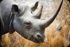 rhino_
